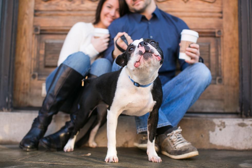 Manayunk Boston Terrier Engagement Photographer