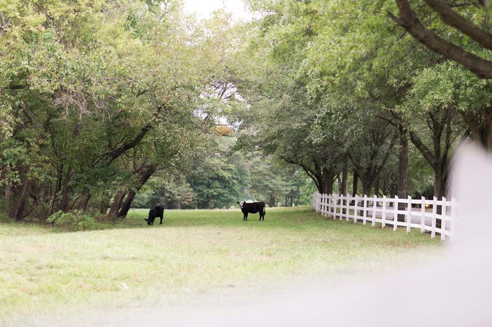 Wren Bridal - Timberlake Farm Wedding - Philly Farm Wedding Photography
