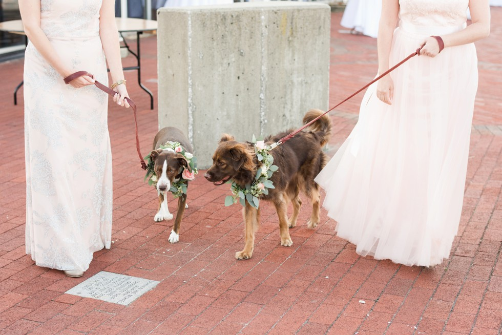 Baltimore Museum of Industry wedding dog party with floral collars made by Scentsational Florals