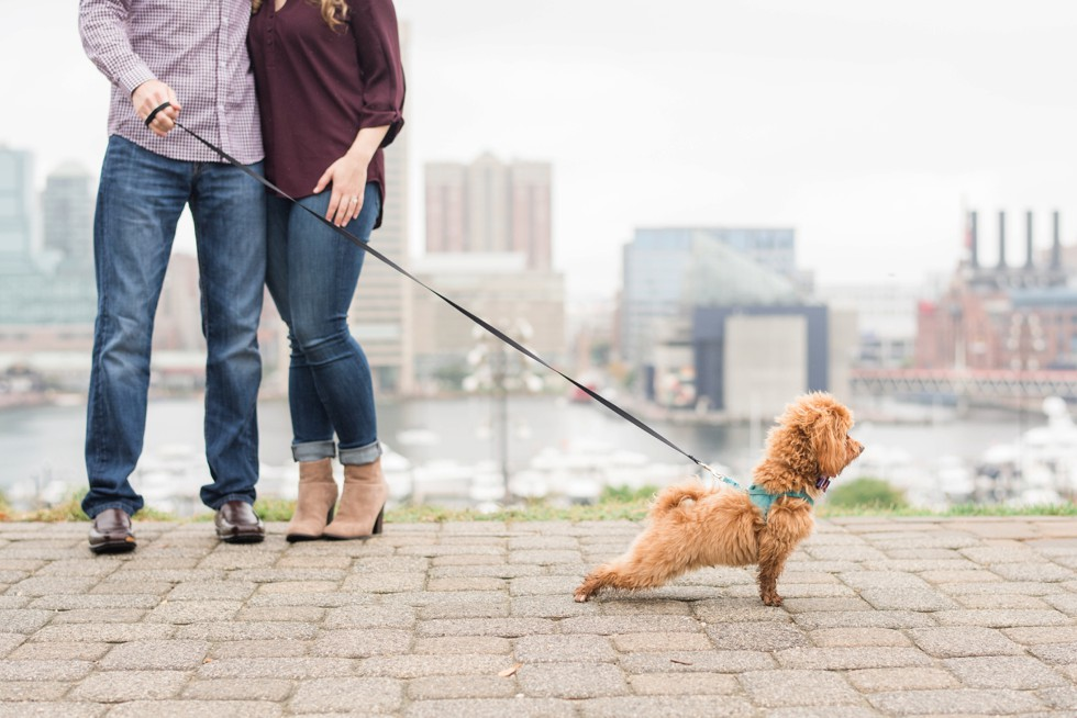 Maltipoo in a couple's engagement photos on Federal Hill
