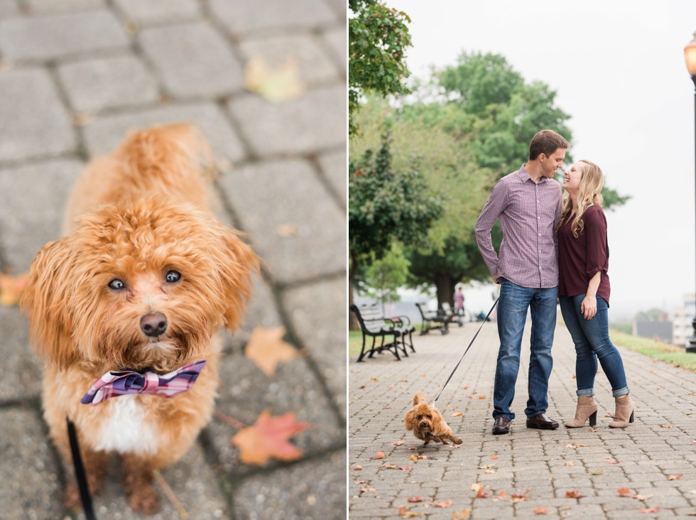 Federal Hill Fall Engagement photos with 8 month old maltipoo puppy