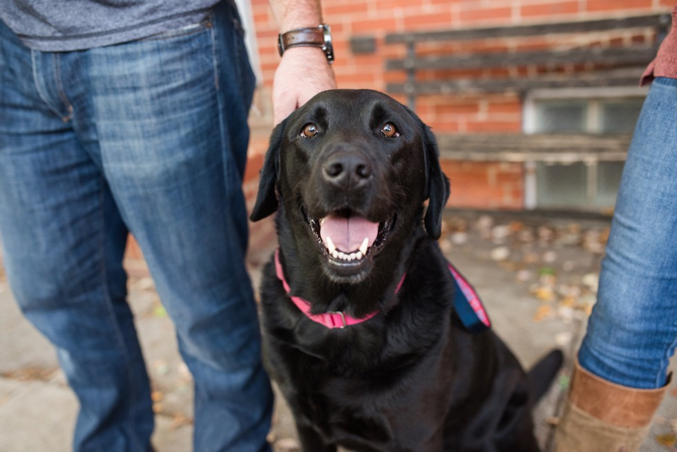 black lab in engagement photos at home