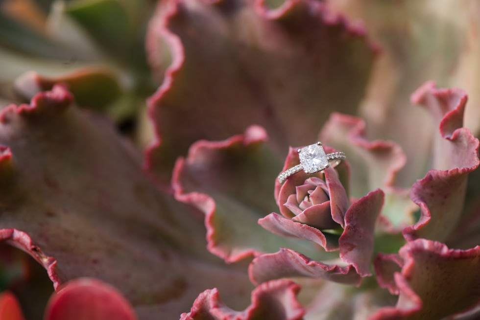 cushion cut engagement ring on colorful succulent