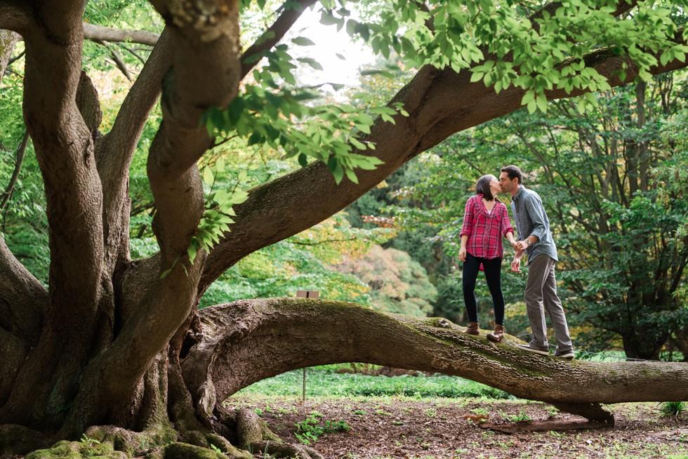 Magnolia slope at morris arboretum