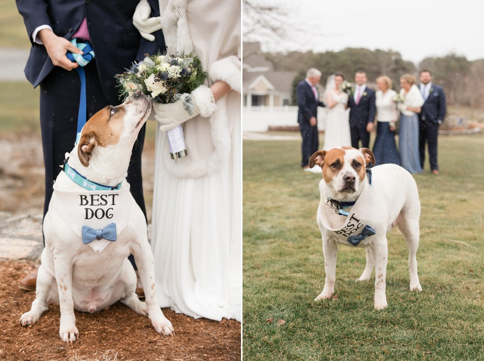 Best dog Cape Cod Wedding
