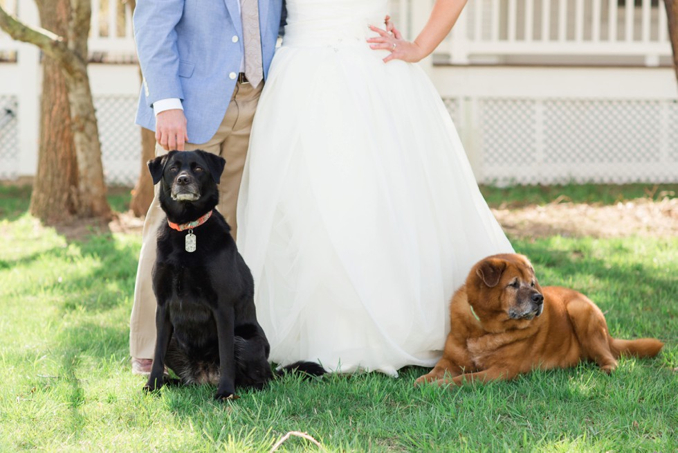 Celebrations at the Bay wedding with dogs
