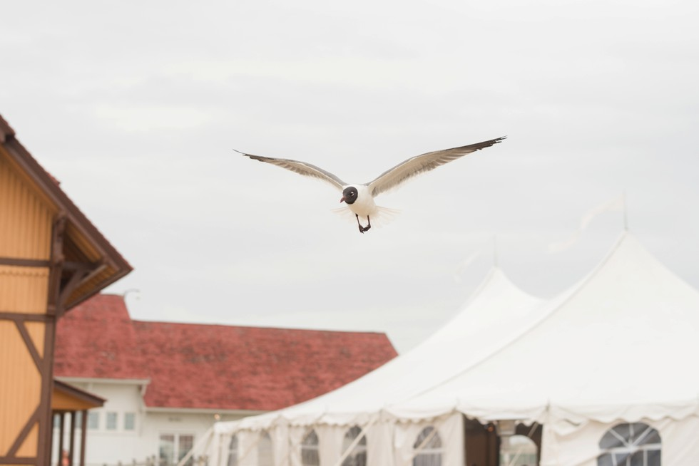 seagull in Rehoboth wedding
