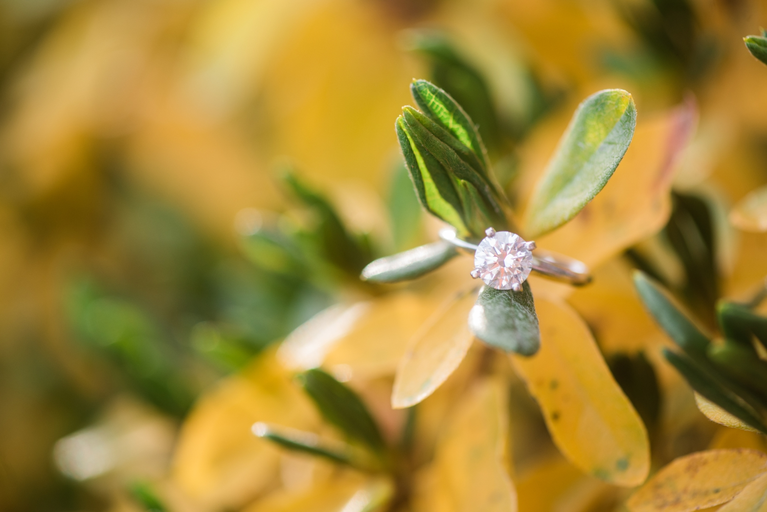 Winter holiday Annapolis Engagement solitaire ring photos