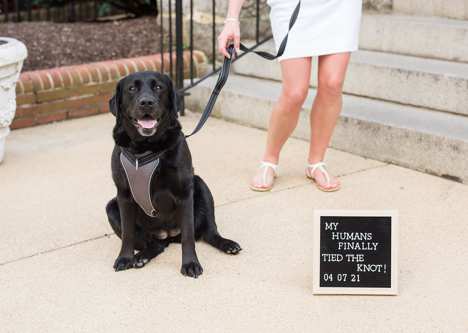 """dog standing next to a sign that reads """"my humans finally tied the knot"""""""
